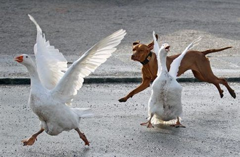 Οι αδέσποτοι σκύλοι «απειλή» για τα οικοσυστήματα | tovima.gr