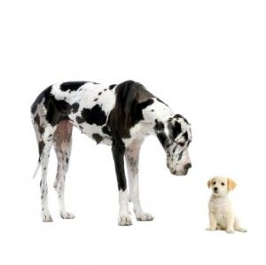 Τα μεγαλόσωμα σκυλιά γερνούν ταχύτερα | tovima.gr