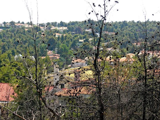 Ρυθμίσεις-σκούπα για δόμηση σε πρώην δασικές εκτάσεις | tovima.gr