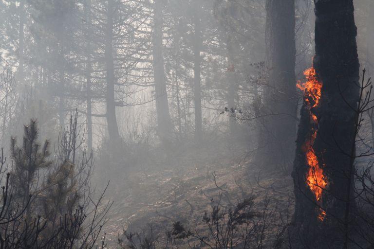 Πυρκαγιά σε δασική έκταση στο Αργυρό Εύβοιας | tovima.gr