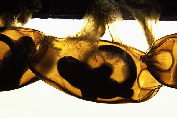 Στα σαγόνια του… εμβρύου καρχαρία | tovima.gr
