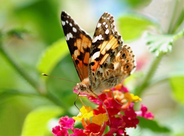 Η μεταμόρφωση μιας πεταλούδας | tovima.gr