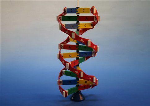 Δυο μεταλλάξεις «γέννησαν» το αναπαραγωγικό μας σύστημα | tovima.gr