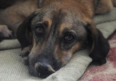 FBI: Η βία στα ζώα είναι «έγκλημα ενάντια στην κοινωνία» | tovima.gr