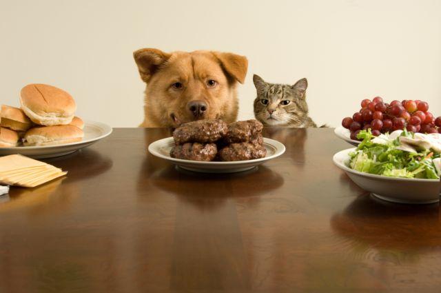 Μη δίνετε ό,τι τρώτε στο κατοικίδιό σας | tovima.gr