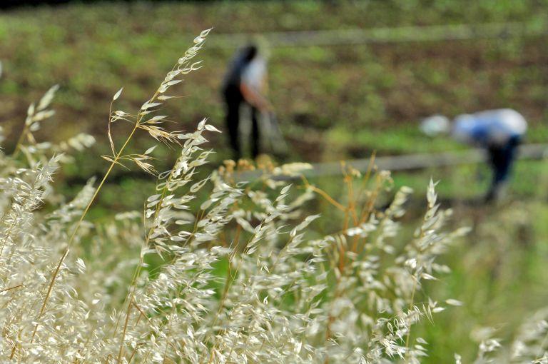 Ανθρώπινο κρανίο βρέθηκε σε χωράφι στη Μεσσηνία | tovima.gr