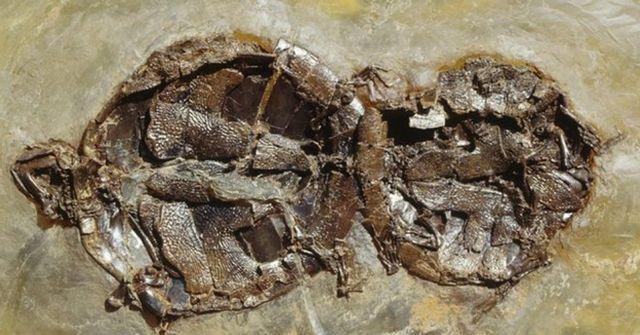 Απολιθωμένοι εραστές | tovima.gr
