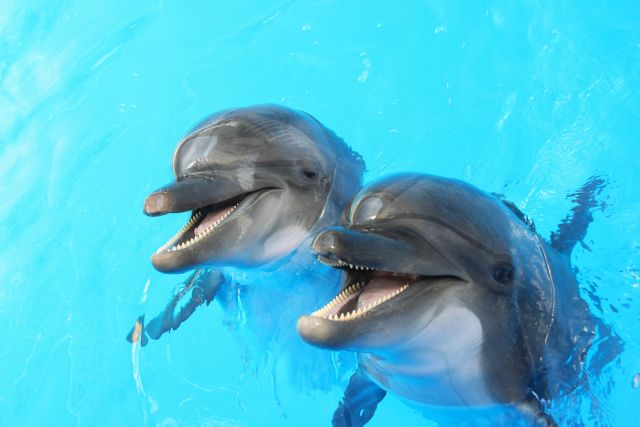 Φάλαινες και δελφίνια ζουν σε κοινωνίες, μιλούν διαλέκτους και κουτσομπολεύουν… | tovima.gr