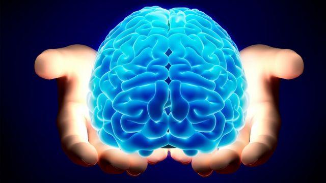 Ο πρώτος ανθρώπινος εγκέφαλος εργαστηρίου | tovima.gr
