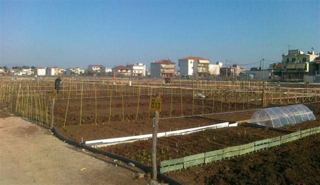 «Ανθίζουν» οι δημοτικοί λαχανόκηποι για άστεγους, άνεργους, άπορους   tovima.gr