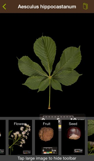 Γνωρίστε τα δέντρα με ένα app   tovima.gr
