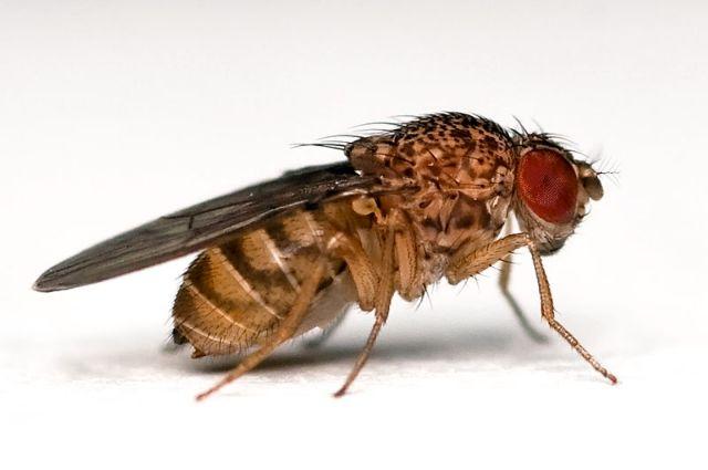 Ακόμα και οι μύγες σκέφτονται πριν δράσουν | tovima.gr