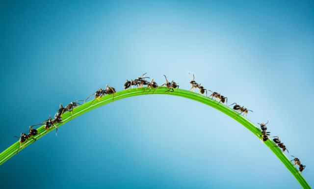 Τα μυρμήγκια επεξεργάζονται δεδομένα καλύτερα από το Google | tovima.gr