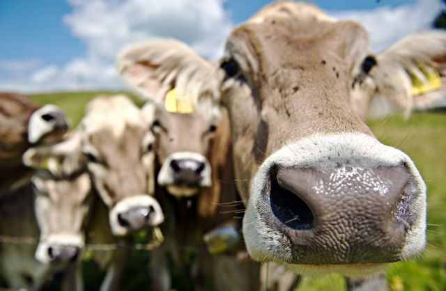 Τα αντιβιοτικά στην κτηνοτροφία «διπλασιάζουν τα αέρια του θερμοκηπίου» | tovima.gr