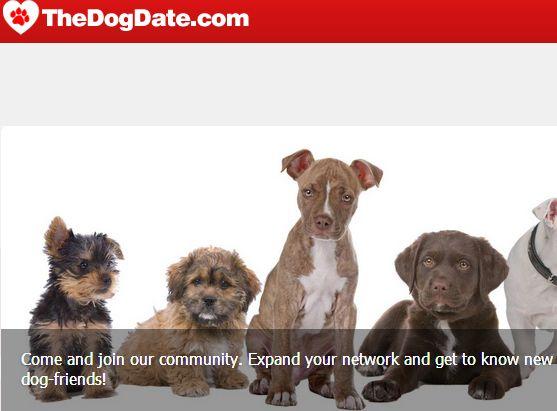 Το πρώτο Facebook για σκύλους είναι εδώ και είναι ελληνικό   tovima.gr