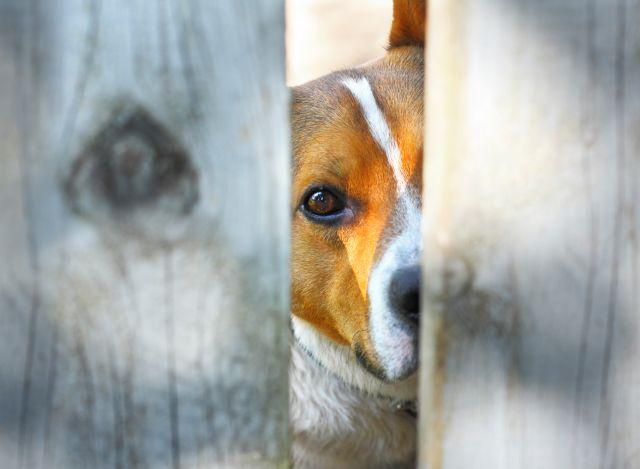 Ρωσία: Τέλος στην κακοποίηση ζώων και με το νόμο | tovima.gr