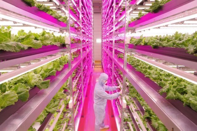 Καλλιεργώντας υπό το φως των … LED | tovima.gr