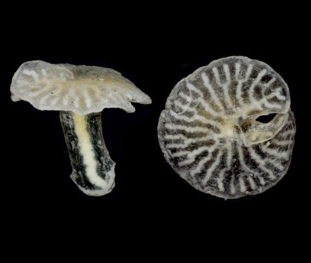 Μυστηριώδη θαλάσσια πλάσματα δεν χωρούν στο δέντρο της ζωής | tovima.gr