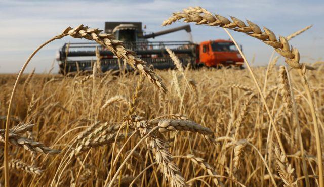 Αύξηση της αγροτικής παραγωγής με επιτάχυνση της φωτοσύνθεσης; | tovima.gr