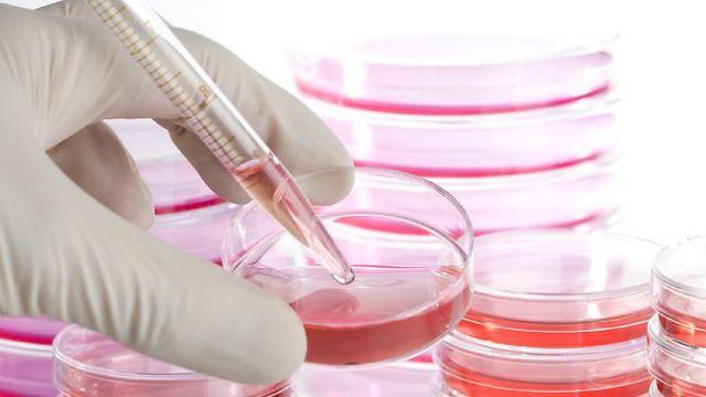 Αναπρογραμματισμένα βλαστοκύτταρα εναντίον ωχράς κηλίδας | tovima.gr