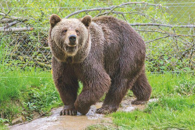 Πιστοποίηση για το «Μονοπάτι της αρκούδας» στο Μέτσοβο | tovima.gr