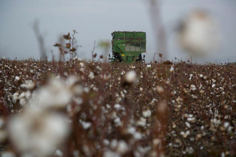 Ξεκινά η προκαταβολή της ενιαίας ενίσχυσης σε 660.000 αγρότες | tovima.gr