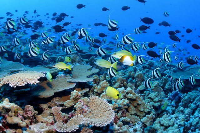Τα ψάρια μεταναστεύουν στους πόλους | tovima.gr