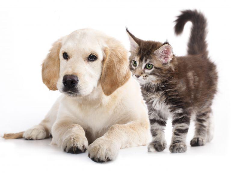 Ενισχύονται δημοτικές δομές για φροντίδα αδέσποτων ζώων | tovima.gr