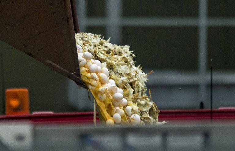 Γερμανία: Νέο κρούσμα ιού της γρίπης των πτηνών σε άγριο πουλί | tovima.gr