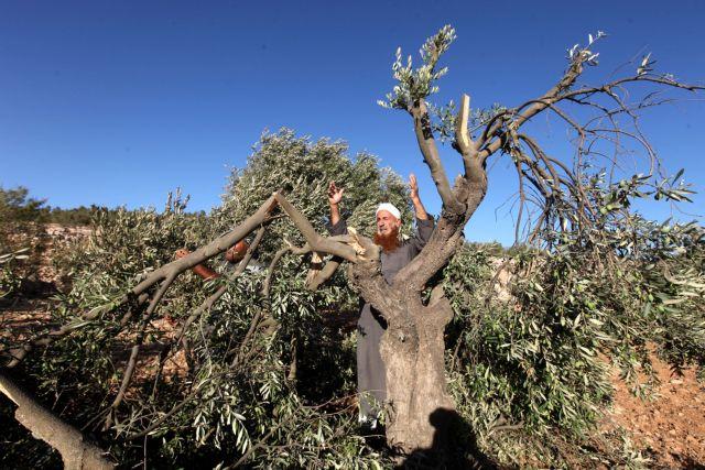 Λάδι ελιάς στις πληγές του Παλαιστινιακού | tovima.gr