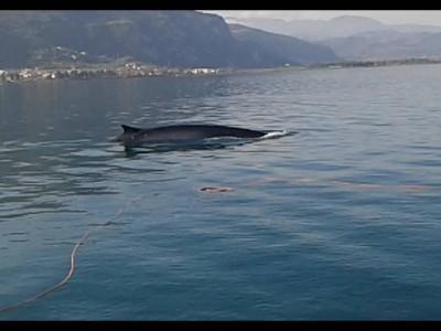 Μια φάλαινα σε απόσταση 150 μέτρων από την ακτή των Καμένων Βούρλων | tovima.gr