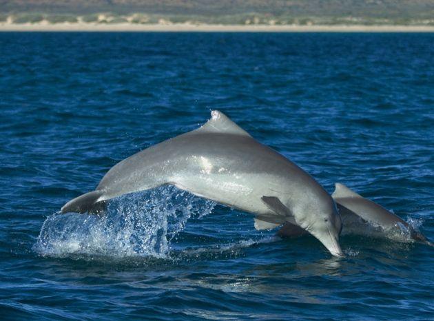 Ούτε στα μισά, η απογραφή της θαλάσσιας ζωής | tovima.gr