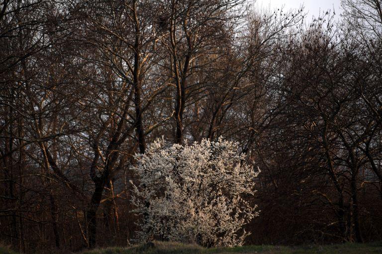 Δενδροφύτευση στο Δάσος της Καισαριανής με τη στήριξη της HSBC | tovima.gr