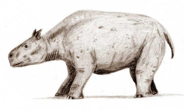 Λύθηκε το μυστήριο των «πιο παράξενων ζώων του κόσμου» | tovima.gr