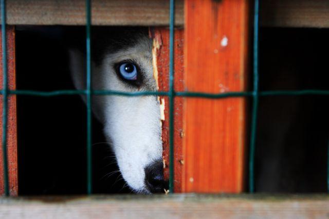 Ανθρωποι και ζώα: βίοι παράλληλοι στον θάνατο | tovima.gr