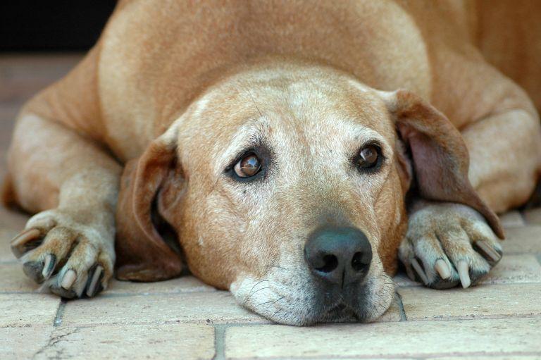 Καβάλα: Δημοτικός σύμβουλος κακοποίησε βάναυσα τον σκύλο του | tovima.gr