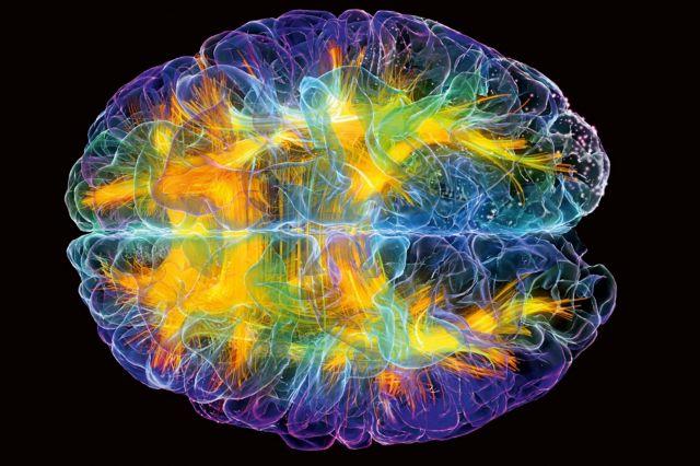Η περιοχή του εγκεφάλου που κάνει τον άνθρωπο μοναδικό   tovima.gr