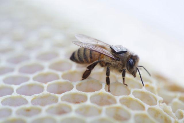 Γιατί πεθαίνουν οι μέλισσες θα αποκαλύψει σύστημα της Intel | tovima.gr
