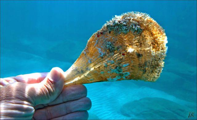 Το πολύτιμο μετάξι της θάλασσας | tovima.gr