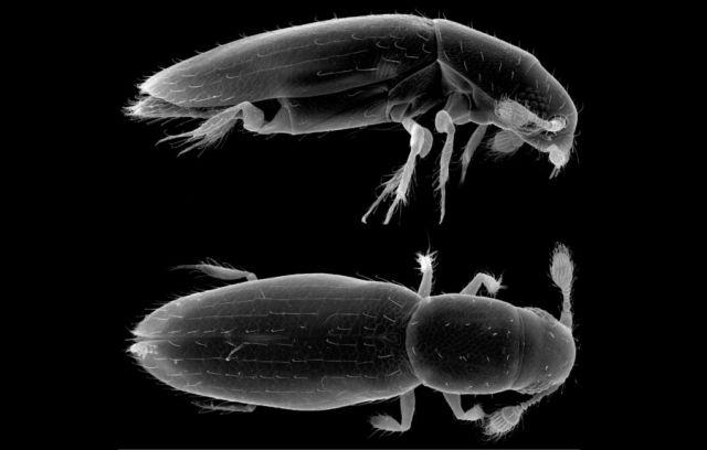 Τα μικρότερα έντομα του κόσμου | tovima.gr