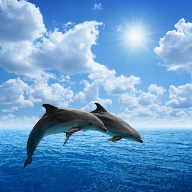 Τι γνώμη έχετε για τα δελφίνια; | tovima.gr