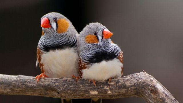 Ακόμα και τα πουλιά έχουν συζυγικά καβγαδάκια   tovima.gr