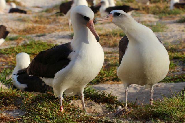 Το γηραιότερο άγριο πτηνό θα γίνει ξανά μητέρα | tovima.gr