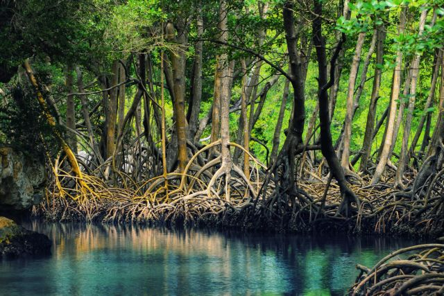 Φοινικέλαιο, απειλή και για τα πολύτιμα μαγκρόβια δάση | tovima.gr