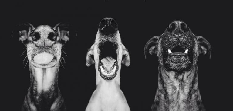 Και όμως, οι σκύλοι έχουν φωνή | tovima.gr