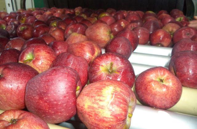 Τα μήλα Ζαγορίν γεύονται στη Μέση Ανατολή | tovima.gr