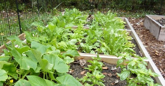 Δημιουργήστε το δικό σας λαχανόκηπο με τη στήριξη του ΑΠΘ   tovima.gr