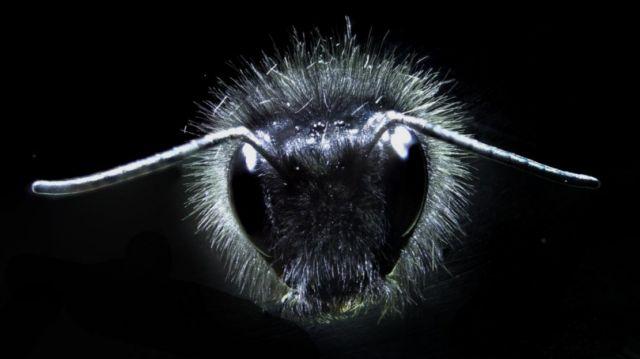 Πώς οι μέλισσες αντιλαμβάνονται τα ηλεκτρικά πεδία των λουλουδιών | tovima.gr