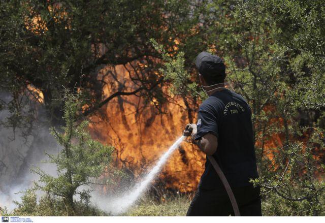 Υπό μερικό έλεγχο η πυρκαγιά στον Ελαιώνα στη Θήβα | tovima.gr