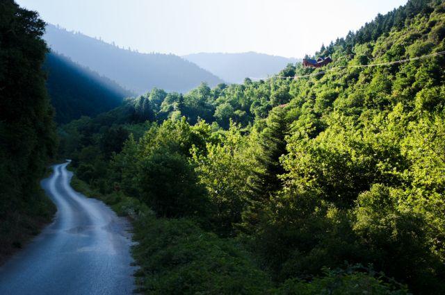 Δάση στο χάος των νόμων δύο αιώνων   tovima.gr